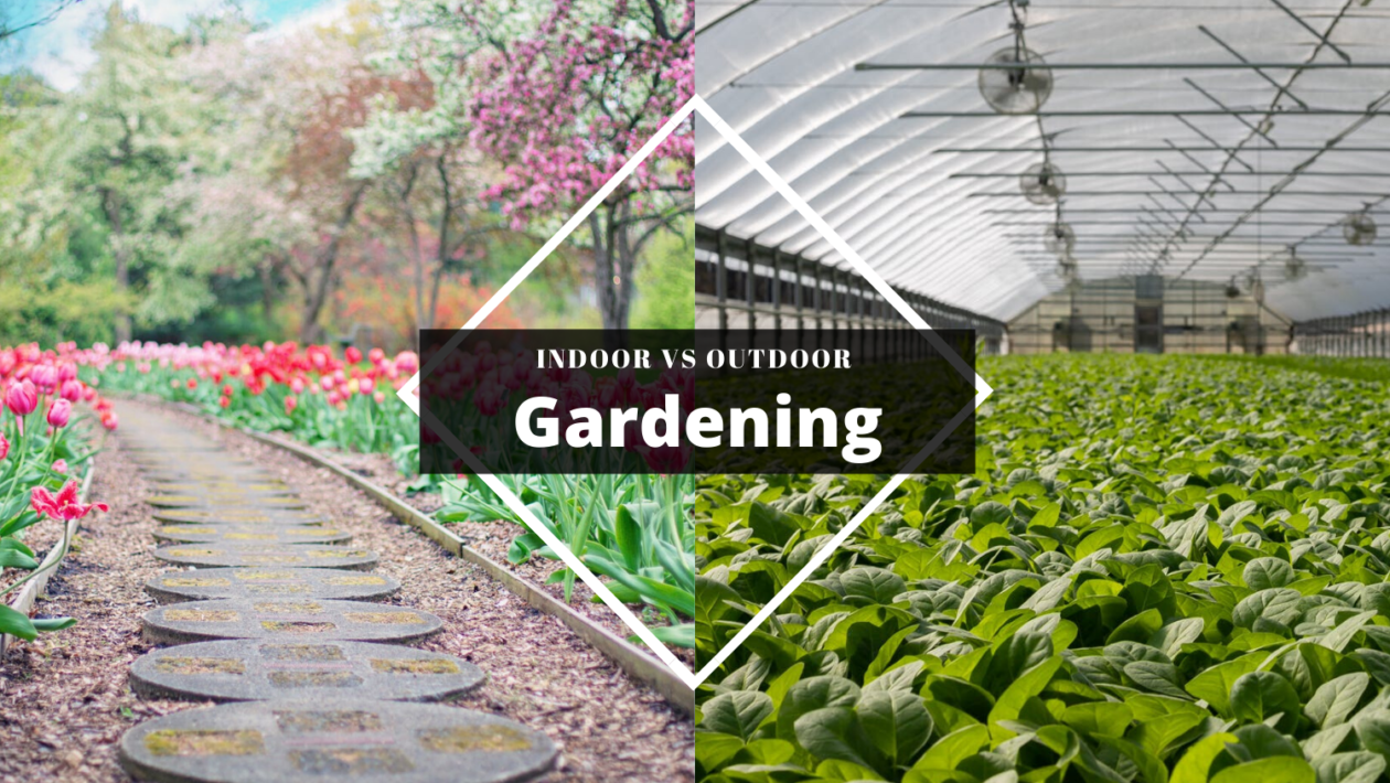 Indoor Gardening over Outdoor Gardening