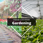 9 Benefits of Indoor Gardening over Outdoor Gardening